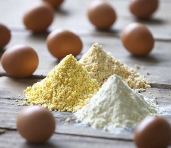 oeuf protéine poudre