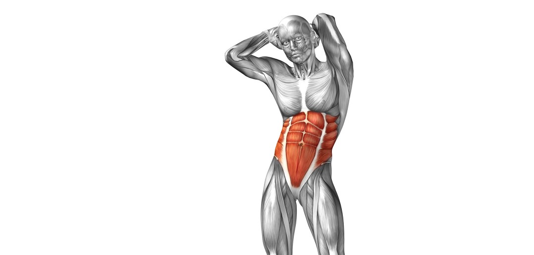 abdominaux muscles