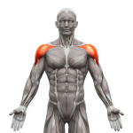exercices-fitness-deltoïdes