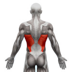 exercices-musculation-grand-dorsal