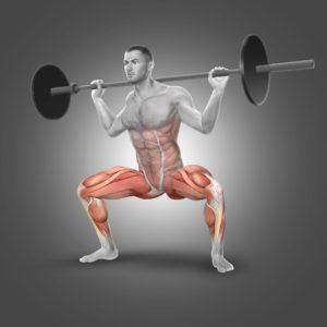 squat sumo muscles solicites