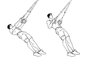 rowing poitrine trx