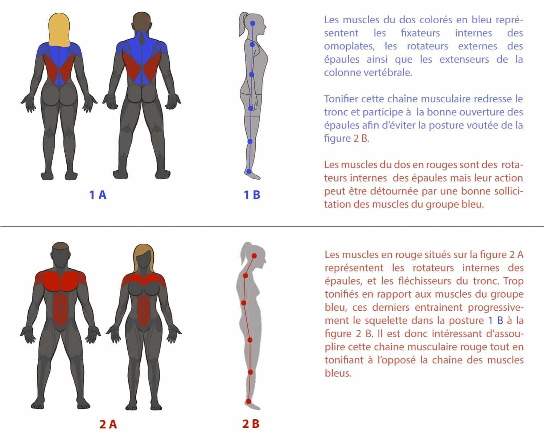 importance de muscler le dos