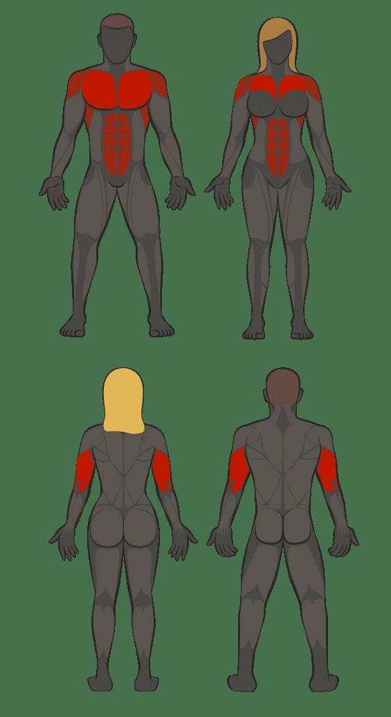 muscles sollicités pompe